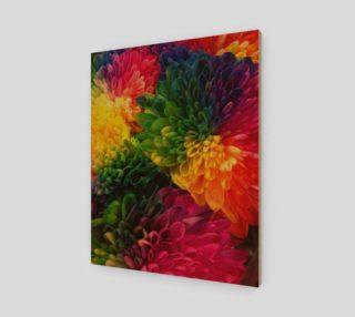 Rainbow Dahlias preview