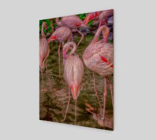 Aperçu de Pink Flamingos