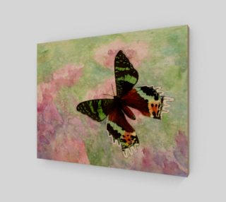 Urania Ripheus butterfly preview
