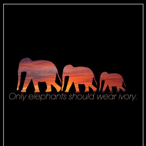 The Asian Elephant photo