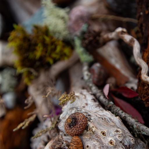 Photo de profil de Ellements Photography