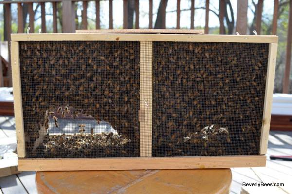 Photo Honeybees - 3 lb Package Bees - April 2021 pick up - $140 (Painesville, OH)