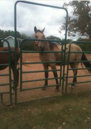 Photo 12 ft Round Pen Corral Panels - $79 (Free Delivery All Surrounding)