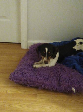 Photo Free to good home (Danielsville)