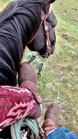 Photo Horse for sale - $2,000 (Three Forks)