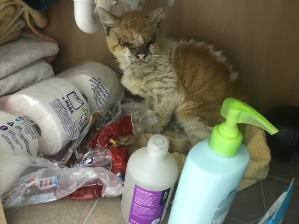 Photo SOMEONE PLEASE HELP THIS CAT (Harlingen, TX)