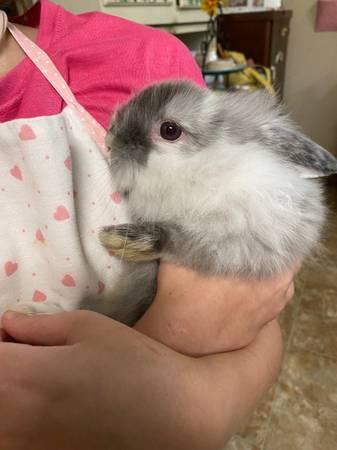 Photo baby bunnies ready for new homes - $40 (Waycross)