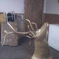 Photo 5x5 elk mount - $450 (butte)