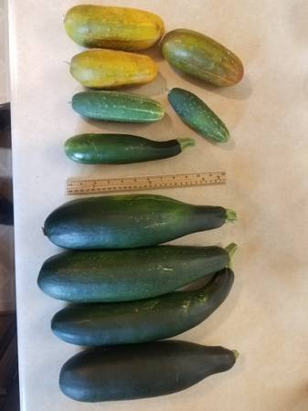 Photo Fresh Pickling Cucumbers and Zucchini - $1 (Central City)