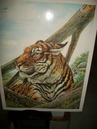 Photo Bengal tiger print by W.D. Gaither - $30 (Amelia)