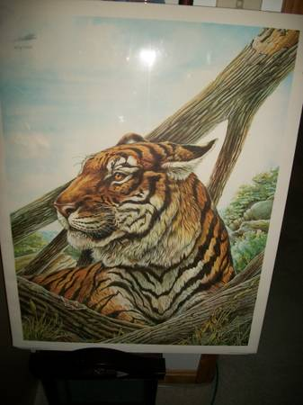 Photo Bengal tiger print by W.D. Gaither - $40 (Amelia)