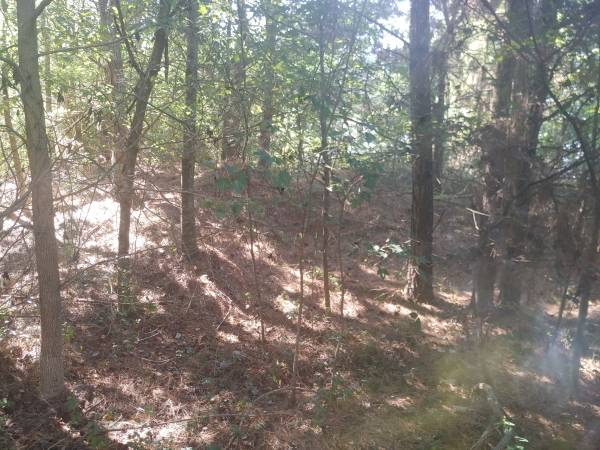 Photo Approx. 300 tons of fill dirt and trees (Bowman, SC)