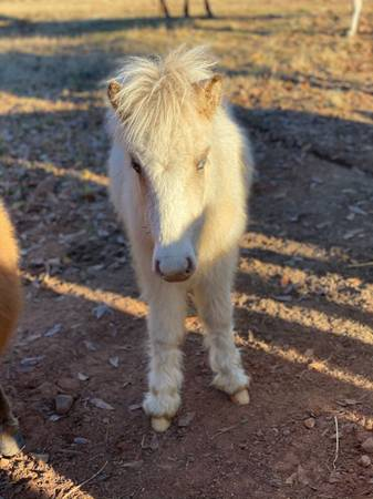 Photo Pony for sale - $300 (Pine mountain)