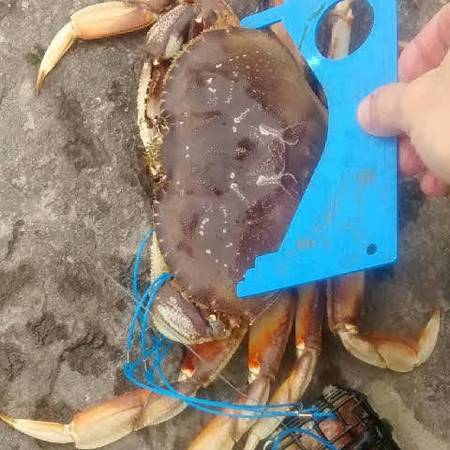 Photo Crab Snare - Catch Crab With Your Fishing Pole - $8 (Salem)