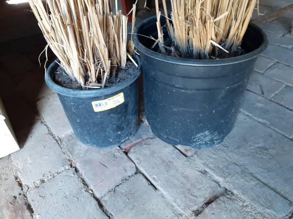Photo Plastic planter pots (Central City)