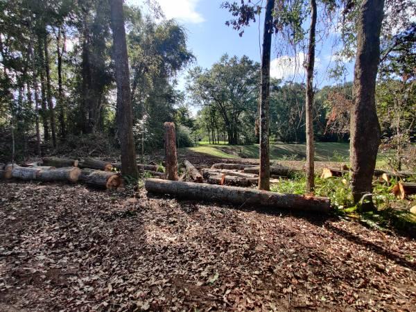 Photo Free Oak Firewood (Tallahassee Eastside)