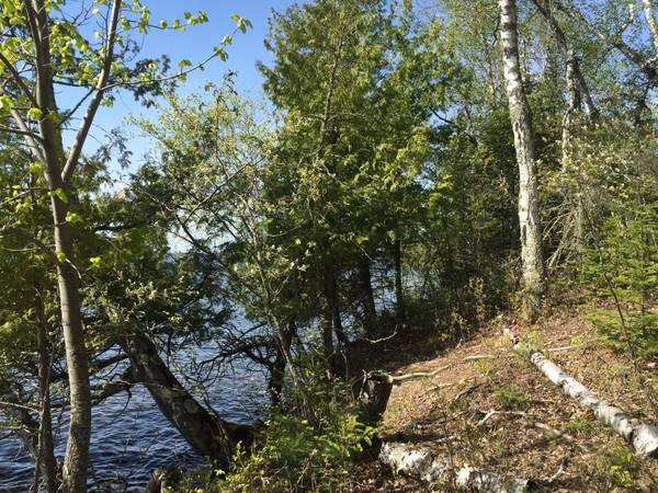 Photo 40 Acres near Pelican Lake-MLS136680 (Orr)