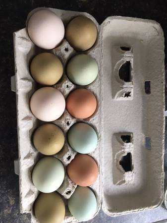 Photo 4 color Fertilized chicken eggs - $1 (Mondovi or Eau Claire)