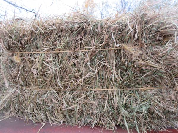 Photo Marsh grass bedding hay for sale in small square bales - $4 (Kronenwetter)