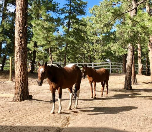 Photo Guest house on working ranch for female ranch hand (Flagstaff)