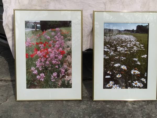 Photo Professional photographs of North Carolina Wildflowers framed $35 each - $35 (Raleigh)