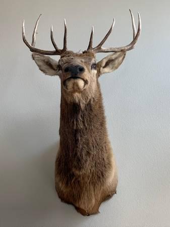 Photo Elk Mount 4x5 - $175 (Windsor)
