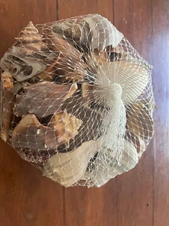 Photo multiple bags of sea shells - $60 (Houston)