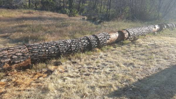 Photo Free Firewood Pine Rounds (1-3 ft) aged ready to split (Mountain Ranch)