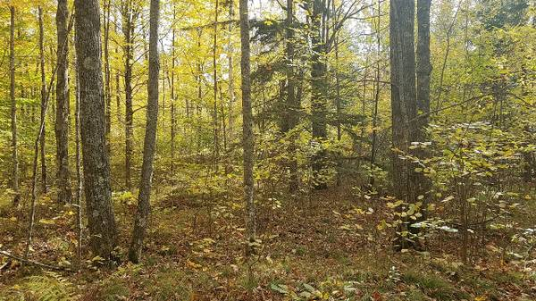 Photo Marinette County, 4 Wooded Acres, Hunt, C or Build (Silver Cliff)