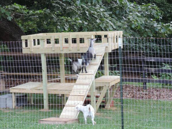 Photo FREE (misc) Goats and Chickens to good home (Spanish fort area)