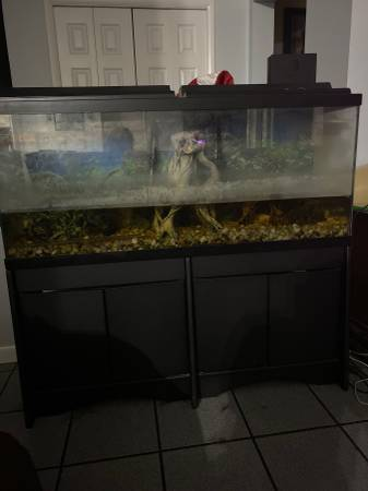 Photo 48x20x12.5 50 gallon fish tank with stand ( aquarium reptile home - $400 (Hickory)