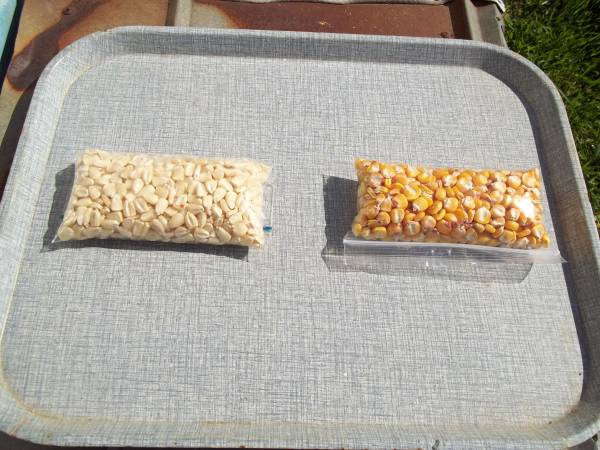 Photo OLD TIMEY LIMBER COB AND HICKORY KING CORN SEED - $10 (Hickory)