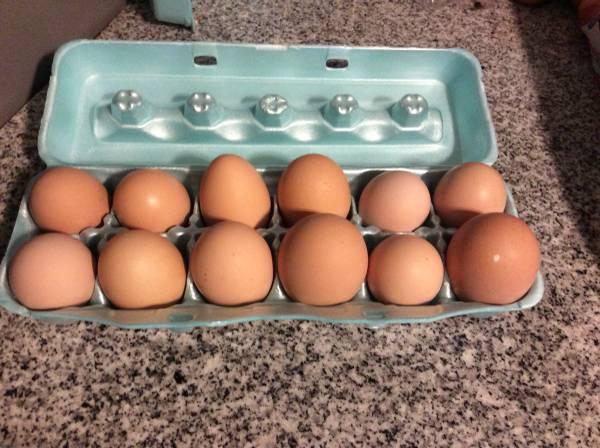 Photo Fresh Eggs (New Market)