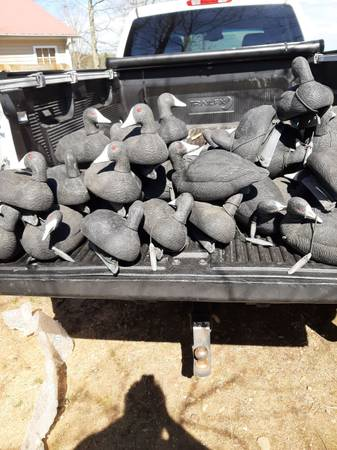 Photo GH coot decoys - $250 (Grant)