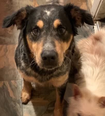 Photo Dogs free to good home (Greenwood)