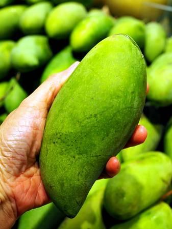 Photo rare mango trees - $165 (Riverside)