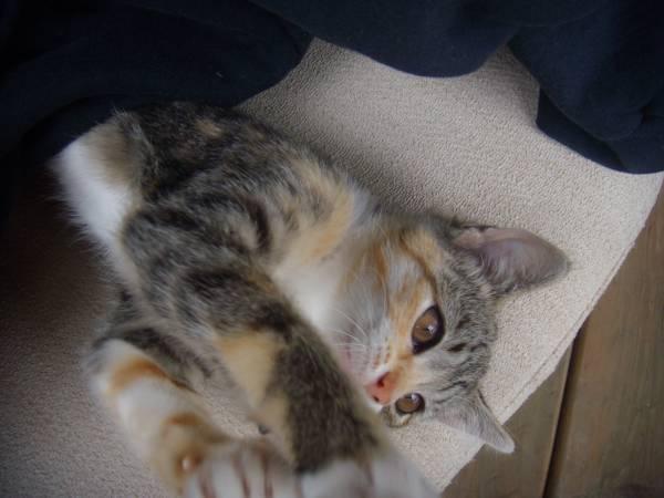 Photo Kitten (Sandy Hook Area)