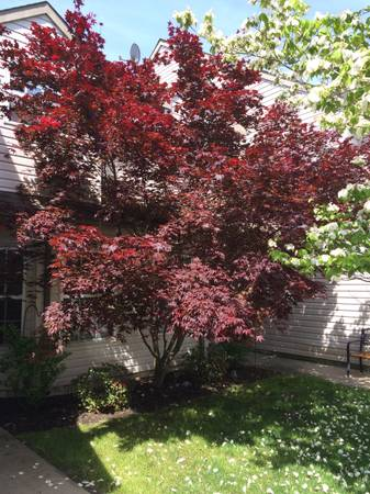 Photo Large Room for Rent (Toms River)