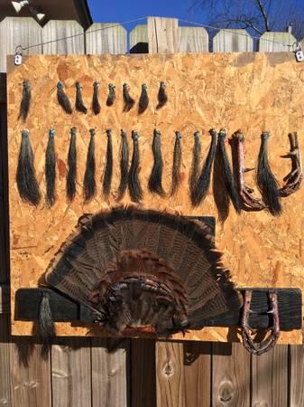 Photo Eastern Turkey Mount (1 Owner) w Fan, Beards, TROPHY Long Spurs - $60 (Memphis)