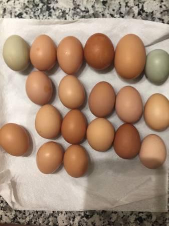 Photo YUMMYBeautiful Fresh Eggs From Our Free Range Hens (N Lakeland)
