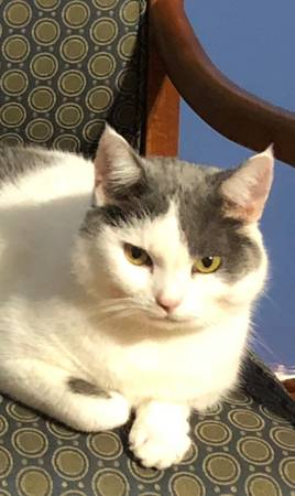 Photo Free Cat to Good Home (Georgetown)