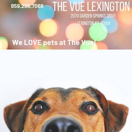 Photo Look  Lease Deals Happening Now  The Vue (Lexington)
