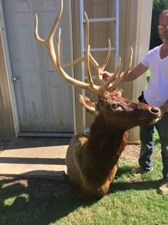 Photo Elk mount - $500 (Atkins)
