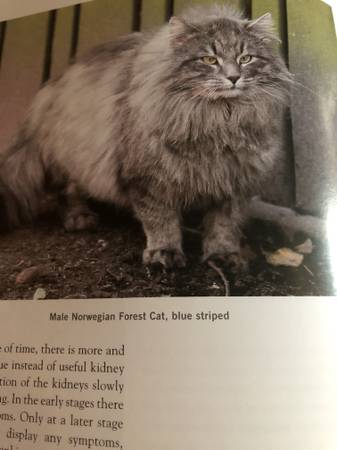 Photo All about different Cats - $10 (Sun Valley)