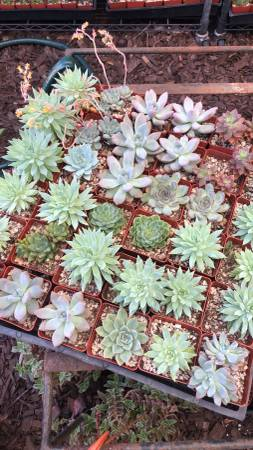 Photo SUCCULENTS CACTI PLANTS USED POTS POTTERY GARDEN ART RUSTY METAL (El SERENO, Los Angeles)
