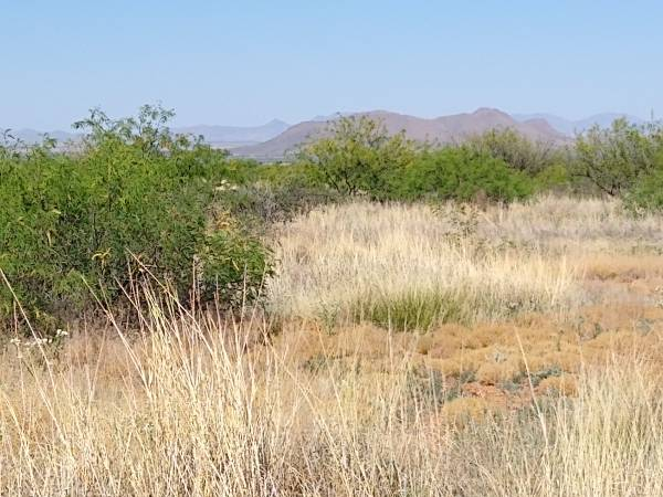 Photo $3,600 Make sure that you come to beautiful Sunsites and 1. 17 acre lots