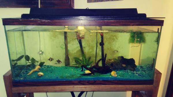 Photo aquarium 33 gallon - $100 (Lake Monticello)