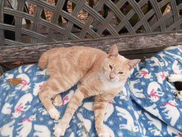 Photo Cats free to a good home or farm. (HAWKINSVILLE)