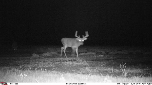 Photo Deer and hog hunting - $200 (Alapaha Ga)