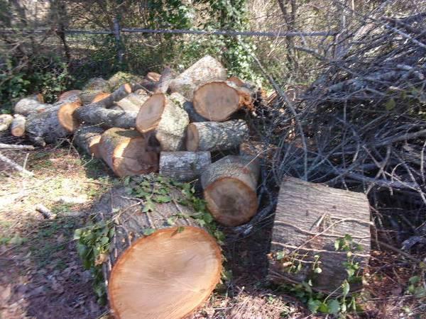 Photo FREE Hardwood OAK firewood in Sandy Springs (sandy springs, Ga)
